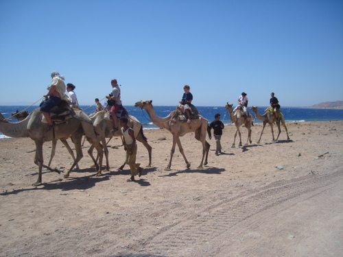 Blue_hole_camels