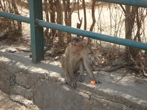 Monkey_ninjia